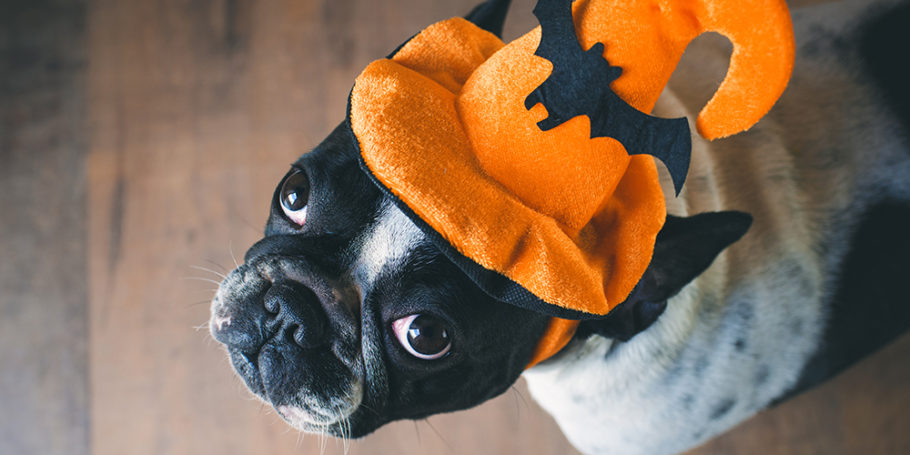 Cute hallowen dog with costume
